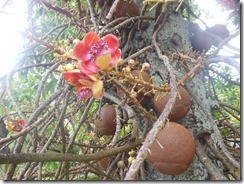 Seychelles 002